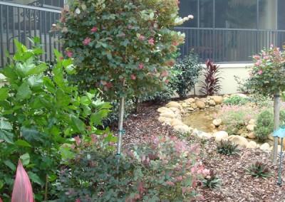 Loropetalum Topiary Tree