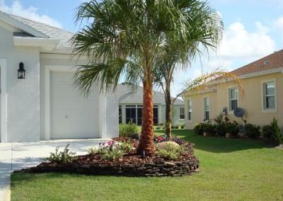 Ribbon Palm
