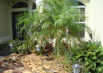 Roebollini Palm