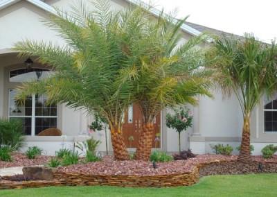 Sylvester Double Palm
